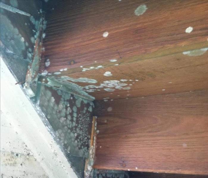 Mold Growth - Dunmore, PA