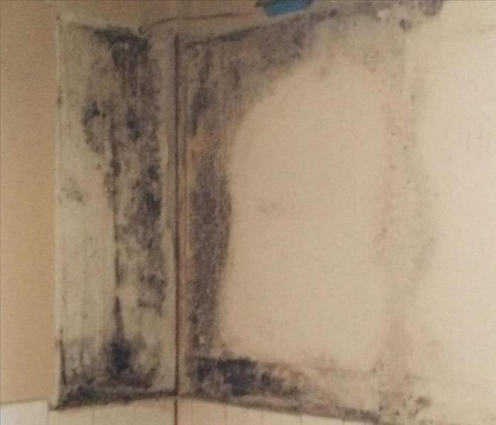 Mold Remediation Mold