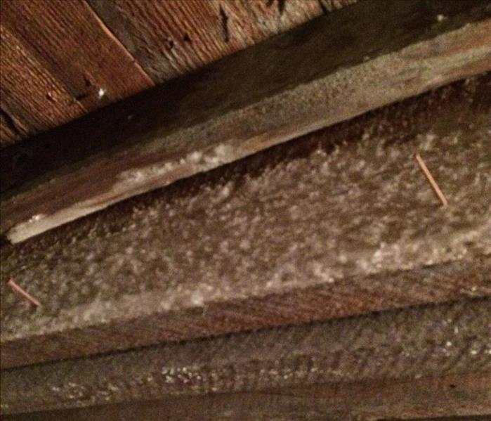 Mold Remediation Crawlspace Mold