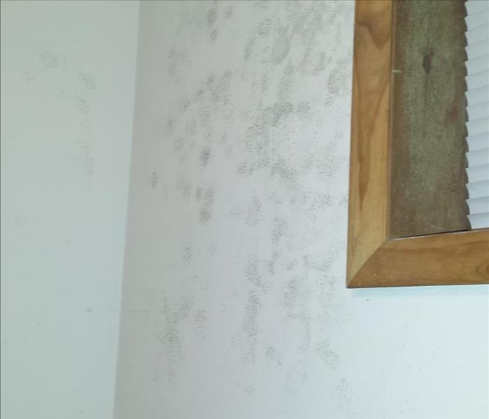 Mold Remediation So You Found Mold, Now What?
