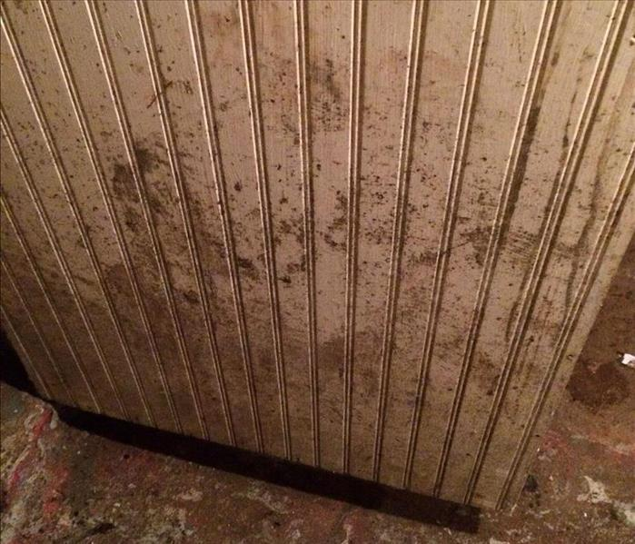 Mold Remediation Mold - Organic Food Source