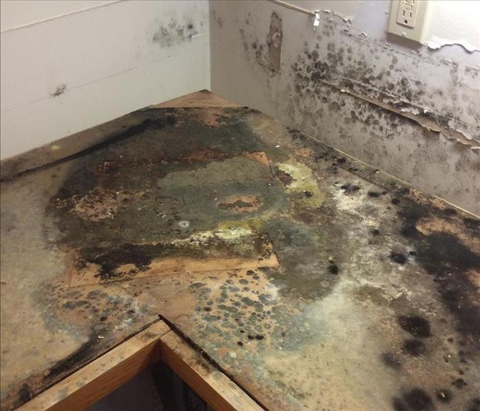 Mold Remediation Untreated Water Damage